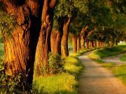 Yürüyüş Yolu Yapbozu Oyna
